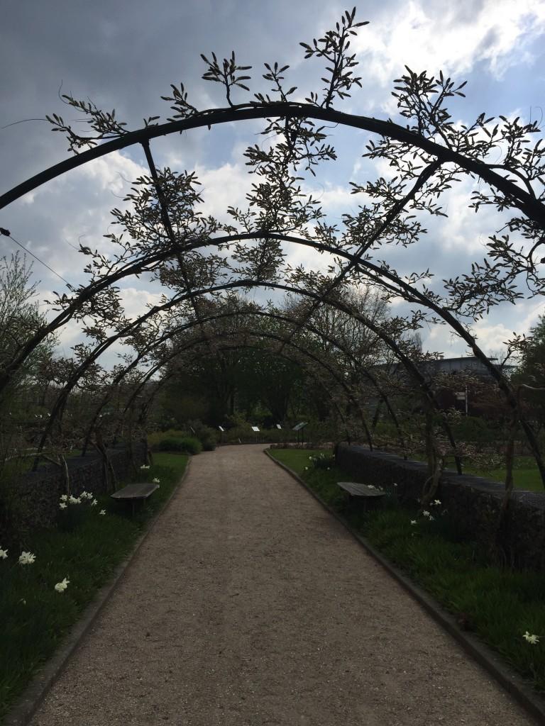 blauwe regen, blog, botanische tuinen Utrecht, bloesem, rollator, gehandicaptenkaart, parkeerplek, koffie, winkeltje, rolstoel